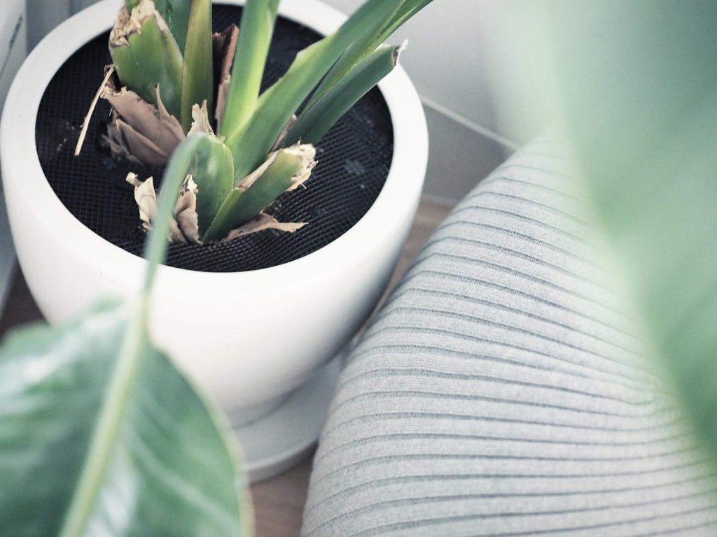 子供・ペットの観葉植物いたずら対策 - オーガスタ