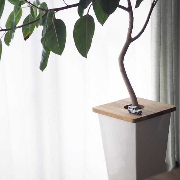 観葉植物の子供対策 - フィカスはプランツテーブルで蓋をしました