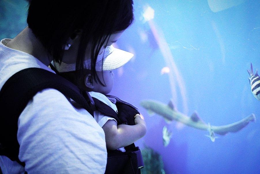 1歳児子連れ大阪旅行記 - 海遊館